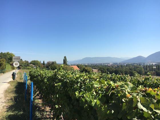 Weinbau in Genf